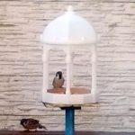 独自に設計し3Dプリントした鳥の餌台に遂に小鳥たちが到来